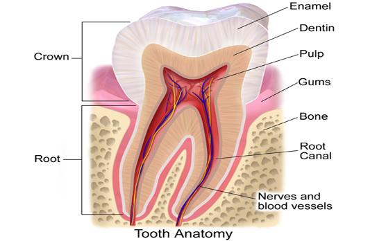 Image result for Dental Trauma Treatment